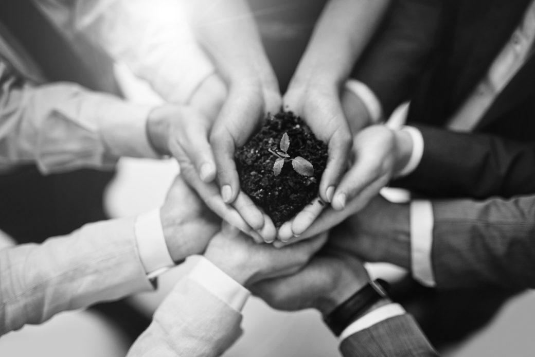 kädet pitelevät multaa, josta versoaa kasvi